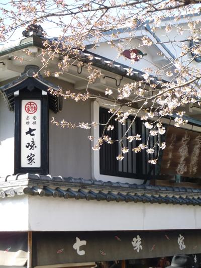 清水本店前の桜