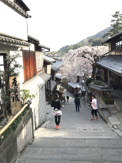 産寧坂のしだれ桜